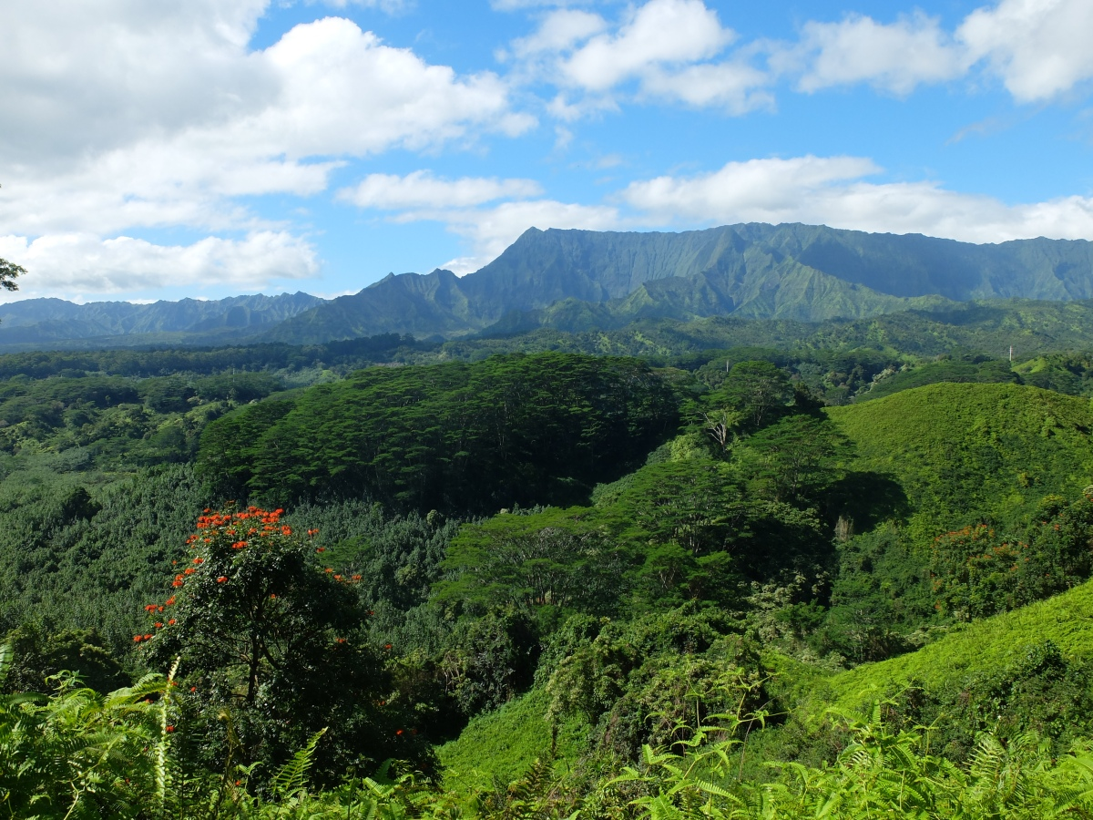 Hiking Kauai: Kuilau Ridge Trail & Moalepe Trail