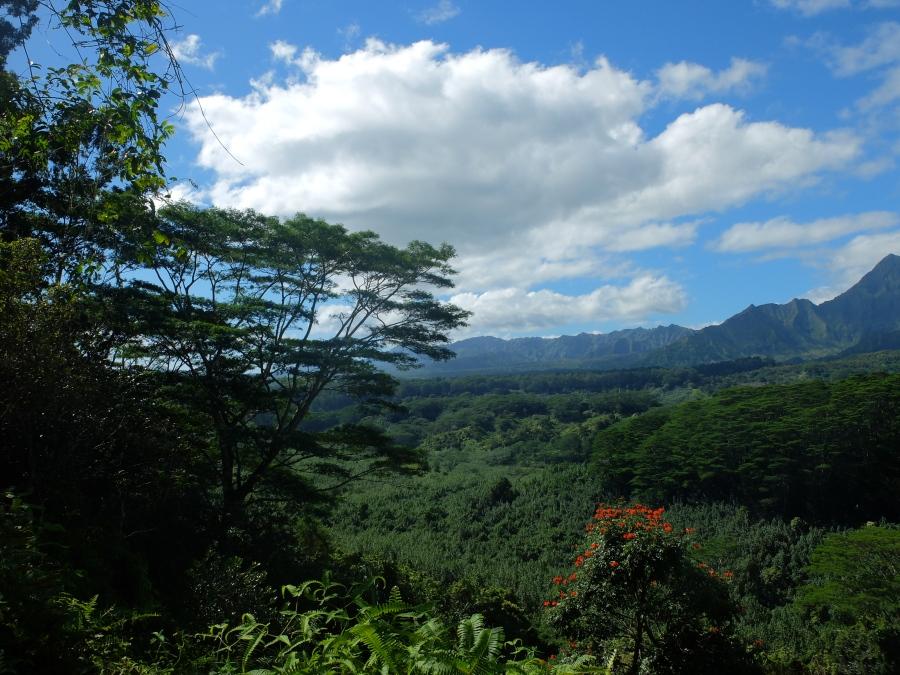 Hiking Kauai: Kuilau Ridge Trail & Moalepe Trail – Champagne